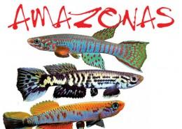 Amazonas-Magazine-Portofolio